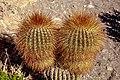 On and around Bolivias' Salar de Uyuni - early morning light on the cactus - (24721552402).jpg