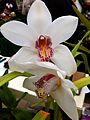 Orchids 20120211.jpg