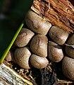 Organism on wooden object.jpg