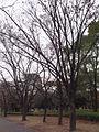 Osaka Castle Park 3.JPG