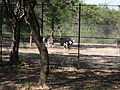 Ostrich in the zoo.jpg