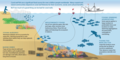 Overfishing threats to coral reefs.png