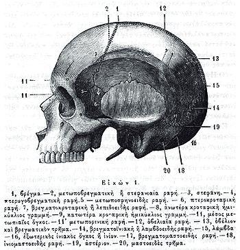 Από το βιβλίο Τοπογραφία Κρανιο-Εγκεφαλικήτου Paul Poirier (1891)