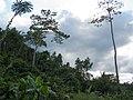 Palawan, Philippines, Forest.jpg