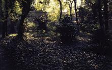 Un bosco in una foto d'autore di Paolo Monti. Fondo Paolo Monti, BEIC