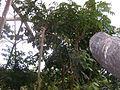 Papiliorama.4824.JPG