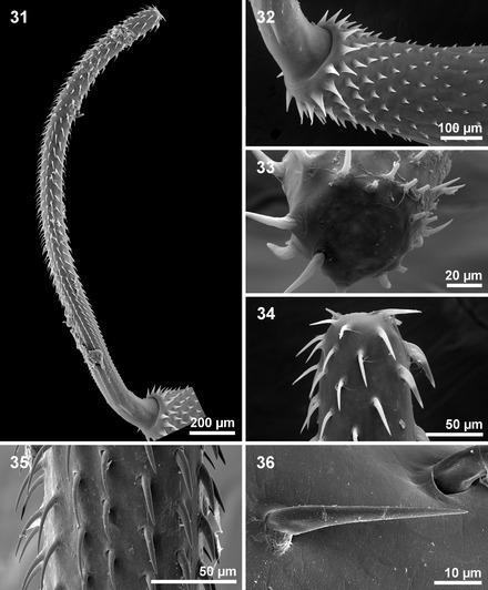 sister group relationship of gnathostomulida and rotifera acanthocephala