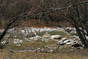 Parque nacional de Ordesa. Río Arazas, orilla en otoño.jpg
