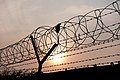Patrick-hendry-1150989 Crow in barbed wire.jpg