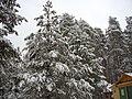 Pavlovsky District, Nizhny Novgorod Oblast, Russia - panoramio (1).jpg
