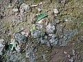 Pedogenic breccia (Conemaugh Group, Upper Pennsylvanian; creek cut on the western side of Caldwell, Ohio, USA) 13.jpg