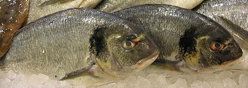 Peixe.Dourada.Fish.jpg