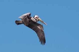 Pelican 4940.jpg