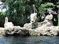 Pelican Trio, Jurong Bird Park, Singapore.jpg