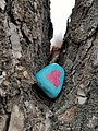 People like to paint rocks in Winnipeg. This was at Little Mountain Dog Park. (45040938374).jpg