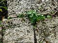Perge - Mauersteine 2.jpg