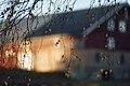 PermaLiv låvebjørk 29-10-20.jpg