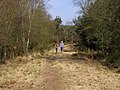 Permissive path on the Roman Road, Bhompston Heath - geograph.org.uk - 398035.jpg