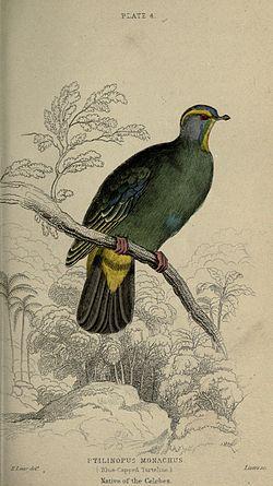 Pigeons (Plate 4) (6976180713).jpg