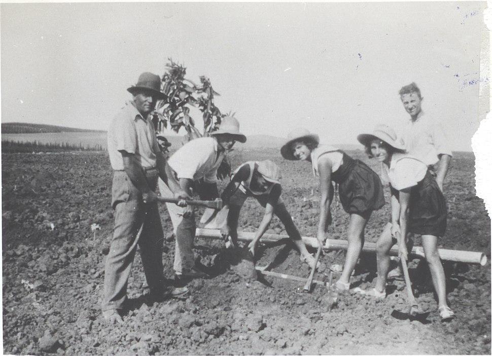 PikiWiki Israel 2615 Agriculture in Israel שתילת הפרדס הראשון
