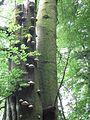 Pilzbaum.jpg