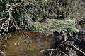 Pincey Brook looking west near Church Lane, Sheering, Essex, England 03.jpg