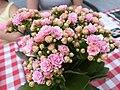 Pink flowers 2020.jpg