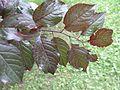 Plant1F.jpg