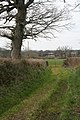 Plymtree, field access track - geograph.org.uk - 140833.jpg