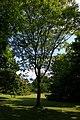 Poensgenpark-11-06-2015 213.jpg