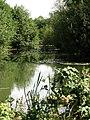 Pond tranquility - geograph.org.uk - 552707.jpg