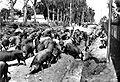 Porcada para o Bacacheri. 1930.jpg