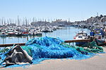 Port of Saint-Vaast- la Hougue (France).JPG