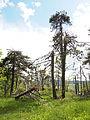 Postojna - broken trees4.jpg
