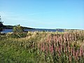 Prince Edward Island 023 (7893583810).jpg