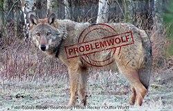 Problemwolf.jpg