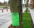 Protect a Tree - Flickr - brewbooks.jpg