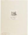 Pteropus aegyptiacus - 1700-1880 - Print - Iconographia Zoologica - Special Collections University of Amsterdam - UBA01 IZ20700037.tif