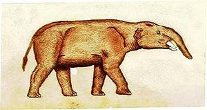 Florentino Ameghino -  Pyrotherium romeroi or beast of fire named in honor of Argentine Army Captain Antonio Romero who sent a tusk, a premolar, and two molars to Ameghino. P. romeroi is a large extinct mammal whose fossil remains were described and classified by Ameghino. Its tusks and trunk evolved separately from the elephants — the species belonged to the xenungulata within the meridiungulata.
