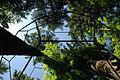 Quantum Reality (Large Buckyball around Trees).jpg