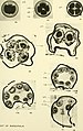 Quarterly journal of microscopical science (1911) (14764237092).jpg