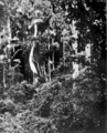 Queensland State Archives 1187 Tropical Jungle Upper Coomera National Park c 1930.png