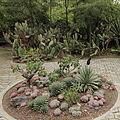 Quitos botaniska trädgård-IMG 8853.JPG