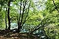 Réserve naturelle régionale des étangs de Bonnelles le 26 mai 2017 - 52.jpg
