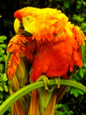 RG color space - Image: RG 16bits palette sample image