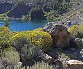 Rabbitbrush by Blue Lake.jpg