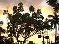 Raios de sol banhando fim de tarde.JPG
