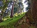 Random pictures of trees in Neelum Valley, Kashmir.jpg