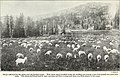 Range management on the national forests (1919) (14782040732).jpg