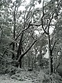 Rare Snow Fall on Mount Difficult Range, Grampians 3.jpg